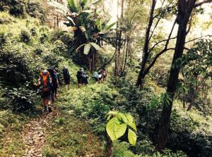 Cambodia Jungle